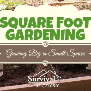 Square Foot Gardening: Growing Big in Small Spaces