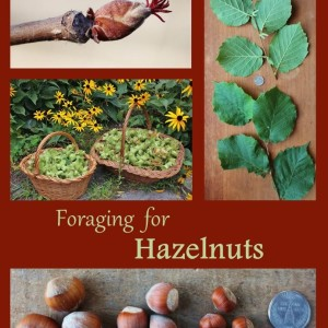 Foraging for Hazelnuts