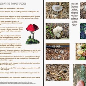 Fun with Fungi: Free Printable Garden Activity for Kids