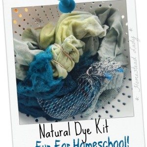 Natural Dye Kit – Fun for School and Homeschool
