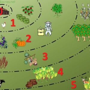 Permaculture Zones on urban lots
