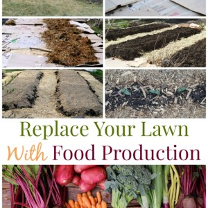 Grow Food Not Lawn