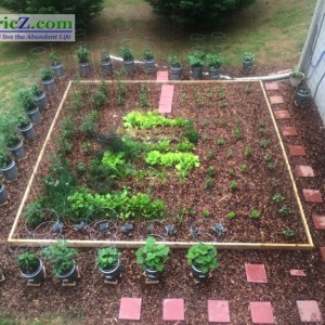 Companion Planting that Works!