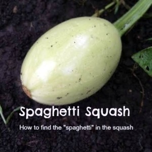 Spaghetti Squash – How to find the spaghetti in the squash