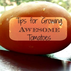 Simple Tips for Growing Awesome Tomatoes