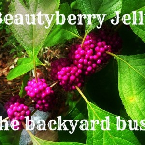 Beautyberry Jelly -The backyard bush