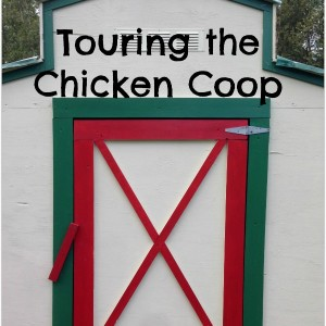 Touring the Chicken Coop