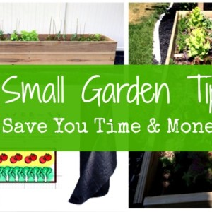5 Tips to Save You Time and Money in Your Small Garden