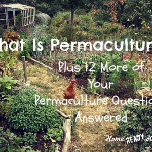 Your Permaculture Questions, Answered
