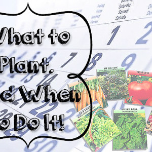 What to Plant & When to Do It!