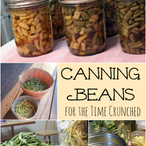 Canning Green Beans for the Time Crunched