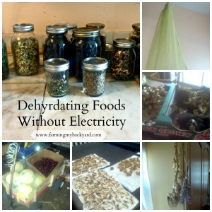 Dehydrating Foods WIthout Electricity