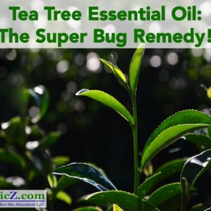 Tea Tree Essential Oil: The Super Bug Remedy!