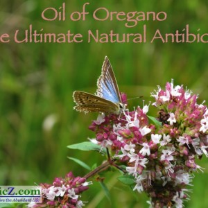 Oil of Oregano the Ultimate Natural Antibiotic