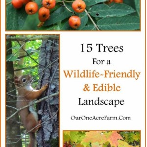 15 Trees for a Wildlife-Friendly, Edible Landscape