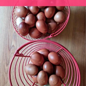 How often should you collect eggs?