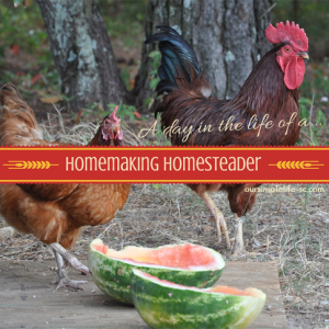 A day in the life of a Homemaking Homesteader