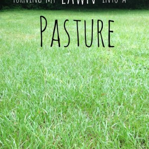 Making our Lawn into Pasture