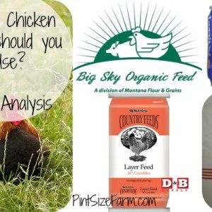 Chicken Feed Cost Analysis – Results!