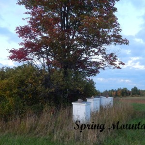 Fall Photos from Our Upper Peninsula Homstead