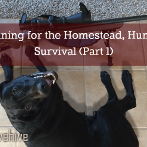 Homesteading, Hunting and Survival Dog Training
