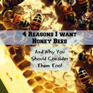 4 Reasons I Want Honey Bees (And Why You Should Consider Them Too!)