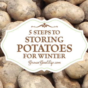 How to Store Potatoes for Winter