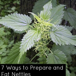 How to Prepare and Eat Nettles