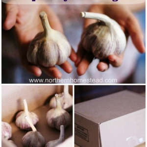How to Store Garlic