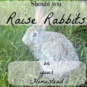Are Rabbits Right for your Homestead?