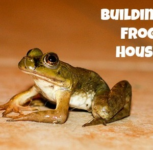 How to Build a Frog House