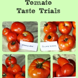 Homegrown Tomato Trials