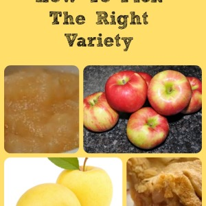 Learn Which Apple Varieties Are Best For Different Purposes