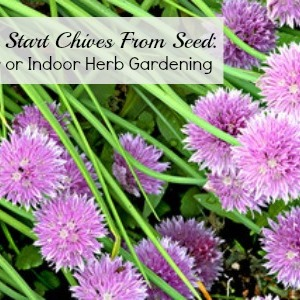 How-to-Start-Chives-From-Seed-Outdoor-or-Indoor-Herb-Gardening