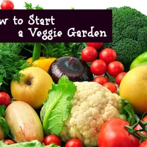 Starting Your Own Vegetable Garden