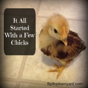 It All Started With a Few Chicks