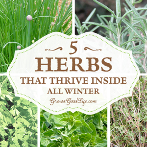 5 Herbs that Thrive Inside All Winter