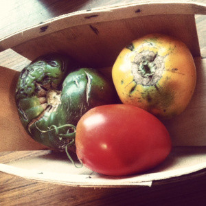 What Makes an Heirloom Tomato?