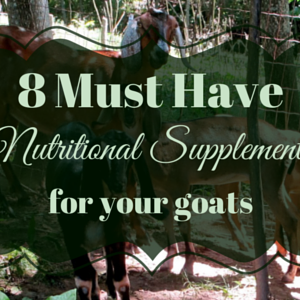 8 Must Have Nutritional Supplements for  Your Goats