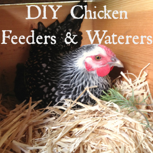 The Best DIY Chicken Feeders and Waterers