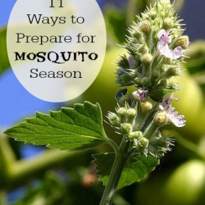 How You Can Prepare for Mosquito Season