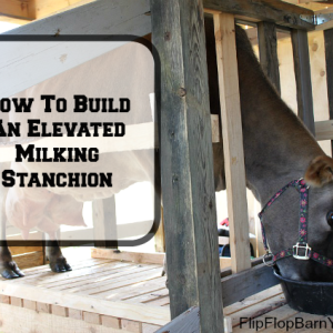 Build A Milking Stanchion