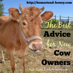 What Every New Cow Owner Should Know