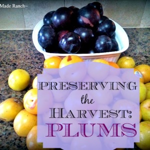 Preserving The Harvest: Plums