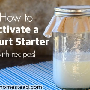 How to Activate a Yogurt Starter- with Recipes