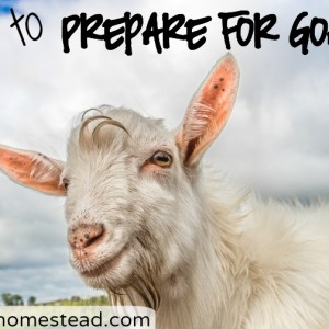 How to Prepare for Goats The Easy Homestead (.com)