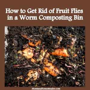 How to get rid of fruit flies in a worm composting bin