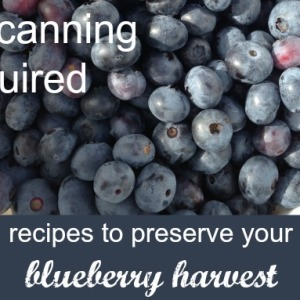 Blueberry Preserve Recipes: No Canning Required