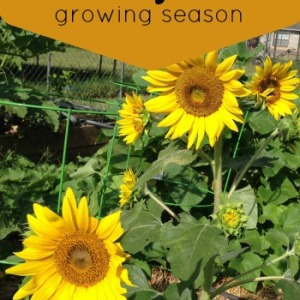 How to Extend the Growing Season in Your Summer Garden