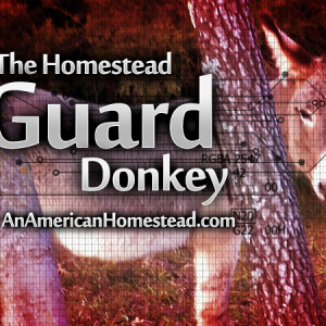 The Homestead Guard Donkey